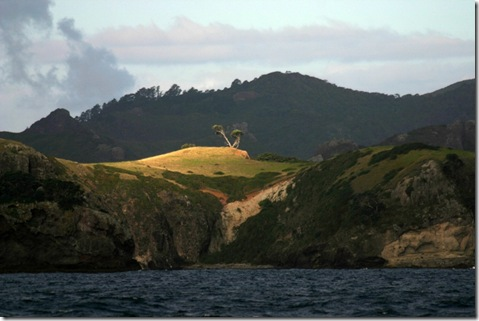 Great Barrier Island2 036